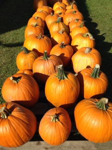 pumpkins galore