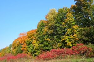 Fall colors along Highway 64. Red sumac in the front.