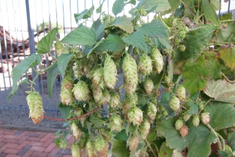 Hops from our Washington travels