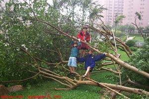 3_kids_tree