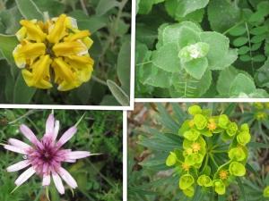 Hydra Flowers
